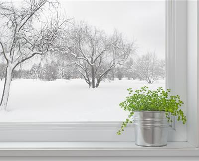 Image for Being Green in Winter